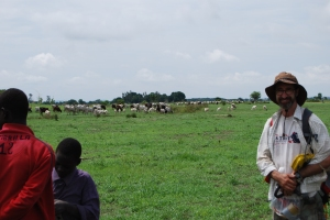 Cattle at Bé, Cameroon in 2014
